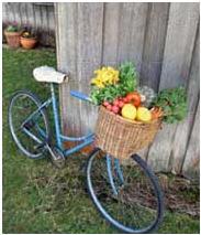 یک دوچرخه سوار چه طور غذا بخورد؟