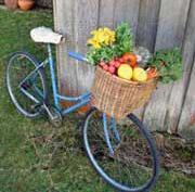 اصول تغذیه در دوچرخه سواری