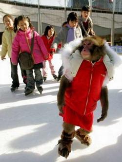 میمون اسکیت سوار !